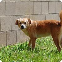 Adopt A Pet :: Jojo - Lufkin, TX
