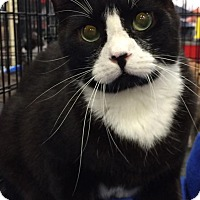 Adopt A Pet :: Scott - Harrisburg, NC