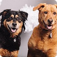 Adopt A Pet :: Goldie & Petunia - Portland, OR