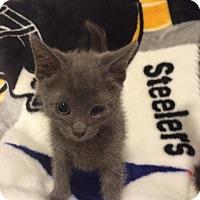 Adopt A Pet :: Ninja - East McKeesport, PA