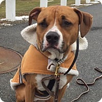 Adopt A Pet :: ERNIE - Sterling, MA