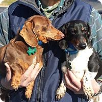 Adopt A Pet :: Oreo - Alpharetta, GA