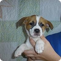 Adopt A Pet :: Kujo - Oviedo, FL