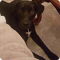 Adopt A Pet :: Violet - Homewood, AL