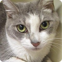Adopt A Pet :: Claire- Low $20 Fee Spayed - Red Bluff, CA