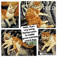Adopt A Pet :: Reed - South Bend, IN