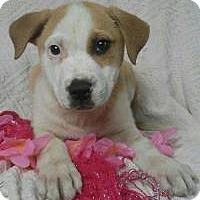 Adopt A Pet :: Dava - Newark, DE