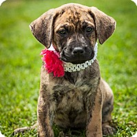 Adopt A Pet :: Ryder - Frisco, TX