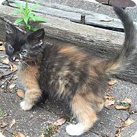 Adopt A Pet :: Aurora - Lincolnton, NC