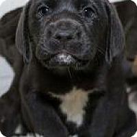 Adopt A Pet :: Hutson - Houston, TX