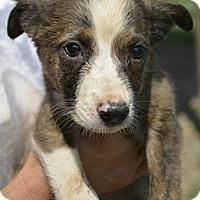 Adopt A Pet :: Bren - Louisville, KY