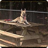 Adopt A Pet :: Reis - Holly Hill, SC