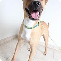 Adopt A Pet :: Willie D161087: PENDING ADOPTION - Edina, MN