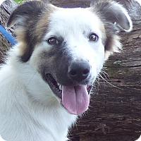 Adopt A Pet :: Nikki - Bedminster, NJ