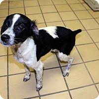Adopt A Pet :: Oreo - Lumberton, NC
