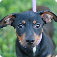 Adopt A Pet :: Buckeye - Nanuet, NY