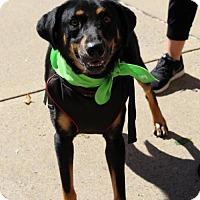Adopt A Pet :: Mackenzie - Adoption Pending - Centreville, VA