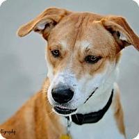 Adopt A Pet :: Ikora - Salt Lake City, UT