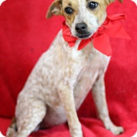 Adopt A Pet :: Faith - Dalton, GA