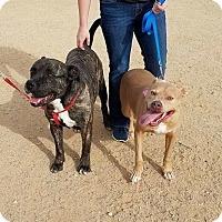 Adopt A Pet :: Bruce - Beverly Hills, CA