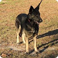 Adopt A Pet :: Dusty - Citrus Springs, FL