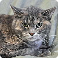 Adopt A Pet :: Kitty Pastel - Fort Leavenworth, KS