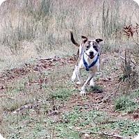 Adopt A Pet :: Dooley - Portland, OR