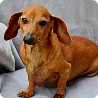 Adopt A Pet :: Buddy - Midland, TX