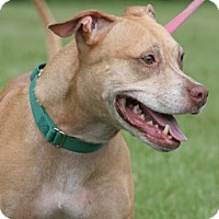Adopt A Pet :: Jewels - North Fort Myers, FL
