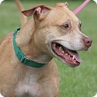 Adopt A Pet :: Jewels - North Fort Myers, FL