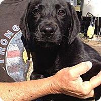 Adopt A Pet :: Baby Nina - Marlton, NJ