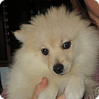 Adopt A Pet :: Elijah - Salem, NH