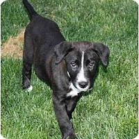 Adopt A Pet :: Whodat - Meridian, ID
