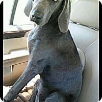 Adopt A Pet :: Emma - Wytheville, VA