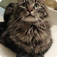 Adopt A Pet :: Calvin - Ennis, TX