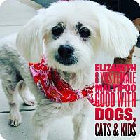 Adopt A Pet :: Elizabeth - Rancho Santa Fe, CA
