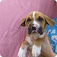 Adopt A Pet :: Skippy - Oviedo, FL