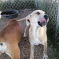 Adopt A Pet :: Isme - Staunton, VA