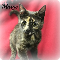 Adopt A Pet :: Marge - Melbourne, KY