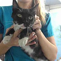 Adopt A Pet :: URGENT on 9/9 San Bernardino - San Bernardino, CA