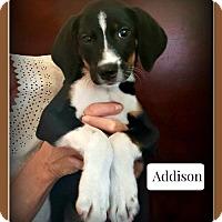 Adopt A Pet :: Addison - Doylestown, PA