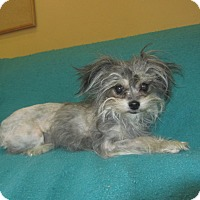 Adopt A Pet :: Cuddles - Ridgway, CO