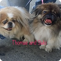 Adopt A Pet :: THOMAS - SO CALIF, CA