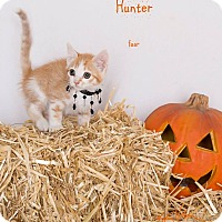 Adopt A Pet :: Hunter - Riverside, CA