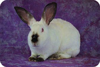 Californian for adoption in Wilmington, North Carolina - Basil