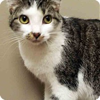 Adopt A Pet :: Dina - Channahon, IL