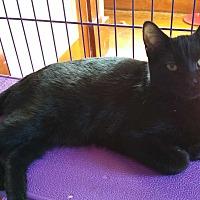Adopt A Pet :: Rachel - Sharon Center, OH