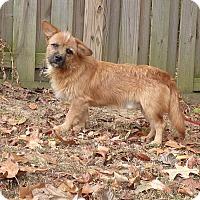 Adopt A Pet :: Grimm - Hartford, CT