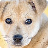 Adopt A Pet :: Riley - Memphis, TN