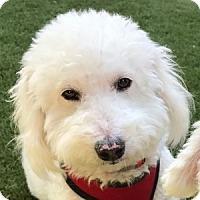 Adopt A Pet :: Crosby - La Costa, CA